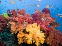 Incalzirea globala ameninta sa distruga Marea Bariera de Corali!