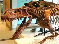 Un crocodil preistoric aproape intact, descoperit in Brazilia! FOTO