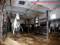 Cei 30 de cai lasati sa moara de foame de un miliardar, dati primariei