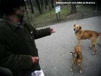 Bucuresti: verde la sterilizarea cainilor fara stapan, pe banii Primariei