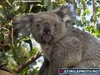 VIDEO. Povestea lui Banjo, ursuletul furat de la Zoo si inapoiat de hoti