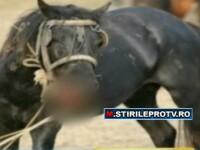 Ieri liberi, maine salam. ONG-urile lupta pentru salvarea cailor din Delta