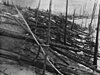 Oamenii de stiinta au reusit sa explice, dupa 100 de ani, misterioasa catastrofa de la Tunguska
