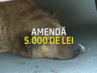 Proiectul Primariei Capitalei: Amenda de 5000 lei pentru bucurestenii care mai hranesc maidanezii