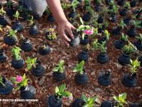 Satul unde oamenii planteaza flori in grenade. In Palestina, viata se naste din proiectile ucigase