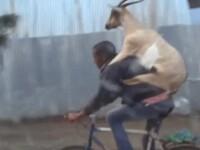 Biciclistul care merge cu capra in spate. Imaginile din Etiopia care au devenit viral pe internet. VIDEO