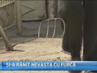 O femeie din Dambovita a fost injunghiata cu o furca de sotul ei. Ruda cu care a surprins-o in pat