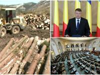 De ce se cearta partidele, presedintele si ONG-urile pe proiectul Codului Silvic. Ponta vrea sa interzica exporturile de lemn