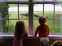 Surpriza de proportii pentru o familie din SUA. Ce au vazut cand s-au uitat pe fereastra