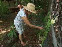 Mostenirea neobisnuita primita de o femeie din Australia. Are 70 de ani si le-a convins pe autoritati sa faca o exceptie