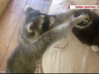 Relatia complicata dintre o pisica si un raton, colegi de apartament. Clipul amuzant s-a viralizat