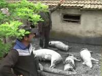 Un animal misterios terorizeaza o localitate intreaga din Neamt. Mai multe animale au fost ucise de