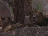 Safari in Emiratele Arabe. Peste doua sute de animale salbatice din zece specii, intr-un urias parc natural