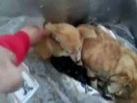 Incident grav intr-un adapost de caini. Explicatia unui angajat dupa ce a bagat un caine VIU intr-o lada frigorifica