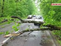 Din cauza ploii, un copac s-a prabusit pe marginea drumului, la iesire din Pitesti. Ce anunta meteorologii