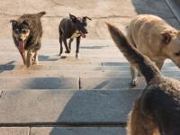 Un tânăr din Brăila s-a ales cu dosar penal, din cauză că avea în curte zeci de câini din rase periculoase