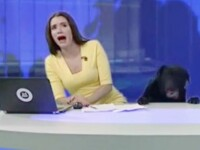 O prezentatoare TV a fost in pragul unui infarct, in direct. Un caine urias si negru a aparut langa ea, la pupitru. VIDEO
