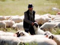 În timp ce ministrul Daea ne cere să alegem oaia, fermierii sunt tot nemulțumiți: Vrem soluții