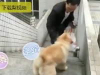 """""""Micuțul urs"""", câinele de 15 ani care își așteaptă zilnic stăpânul în stația de metrou"""