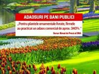 Ancheta spațiilor verzi din Capitală înflorește. Crizanteme cumpărate cu 280 lei firul