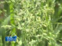 Luna mai, cea mai periculoasă pentru persoanele alergice la polen. Ce li se recomandă