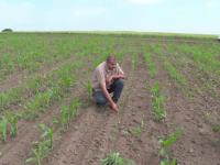 Seceta afectează grav culturile agricole. Fermierii, disperați că nu nu-și pot onora contractele