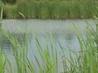 Un tânăr de 26 de ani din Dâmbovița a murit electrocutat la pescuit