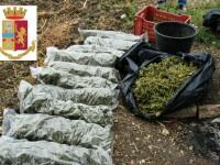 Români prinşi în Sicilia cu sacii de marijuana în spate. Câte kilograme de droguri aveau
