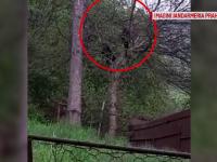 Doi pui de urs filmați în pom, într-o curte din Bușteni. Semnalul de alarmă tras de oameni