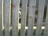Scene tragice în Gorj. O femeie a fost sfâșiată de 5 câini, după ce a mers să-și ajute tatăl