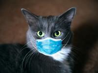 Motivul pentru care Franţa le cere bolnavilor de COVID-19 să stea departe de pisici