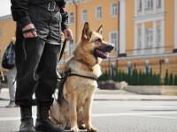 Câini dresați pentru a detecta cazurile de COVID-19, chiar și la pacienții asimptomatici