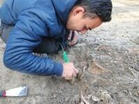 GALERIE FOTO. Mormânt colectiv din vremea ciumei, în care erau așezate mai multe schelete, descoperit la Timişoara