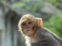 """Momentul inedit în care o maimuță """"fură"""" dintr-un bancomat a fost surprins de camerele de supraveghere. VIDEO"""