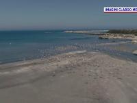 Marea Neagră a început să semene cu Mediterana iar delfinii vin tot mai aproape de mal