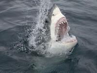 S-a bătut cu un rechin care i-a smuls copilul din barcă. Care a fost deznodământul