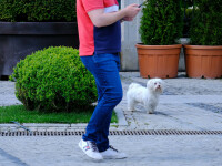 Tătaru: Din 15 mai, românii vor ieși din localitate în baza unei declarații verbale
