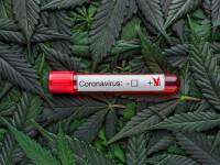 Studiu: Canabisul ar putea ajuta la prevenirea și tratarea noului coronavirus