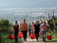 Cine sunt cele 8 muncitoare românce duse în Italia cu avionul privat. Angajator: