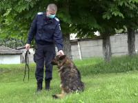 O cățelușă jandarm a ieșit la pensie, în Mureș. Cum poate fi adoptată