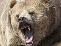 Un bărbat din Alaska s-a luptat timp de o săptămână cu un urs grizzly într-o cabană izolată