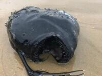 Un peşte monstru, care trăieşte în ape adânci ale oceanului, a fost găsit pe o plajă din California. GALERIE FOTO