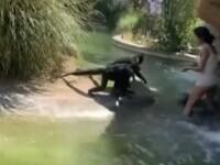 Așa ceva se vede rar. O tânără a sărit gardul la zoo și a început să se joace cu maimuțele