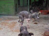 Este cruzimea fata de animale pedepsita pe masura?