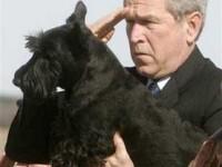 Portret: George Bush - Bufonul