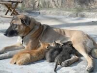 Prietenie: o catea a adoptat puii pisicii