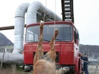 Calul a fost salvat de pompieri