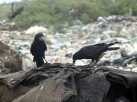 Amplasarea unei gropi de gunoi in Giurgiu scoate oamenii in strada