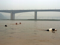 800 de caini morti sau disparuti in urma inundatiilor din Italia