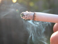 A aparut tutunul-minune care poate elimina cancerul!